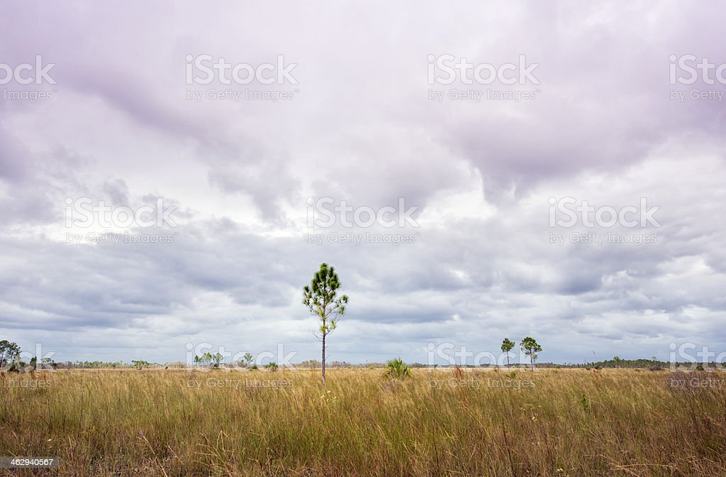 Prarie in the Florida Everglades royalty-free stock photo
