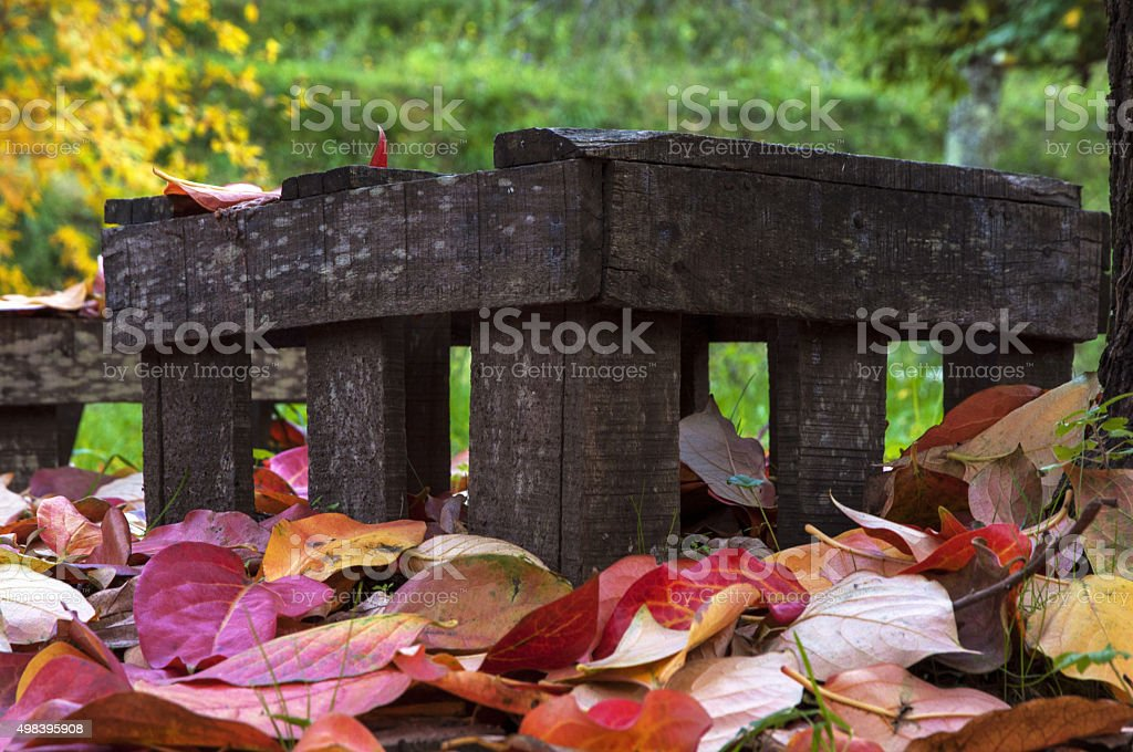 Prato di foglie rosse, Toscana, autunno 2015 - foto de acervo