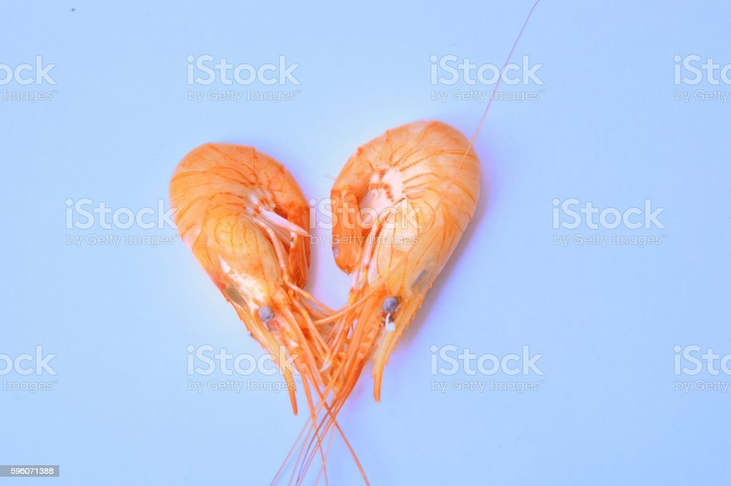 prawn Shrimp royalty-free stock photo