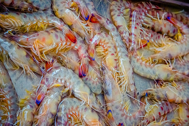 prawns at Catania fish market, Sicily stock photo