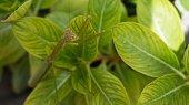 Macro Photography of Praying Mantis Camouflage on Green Leaf