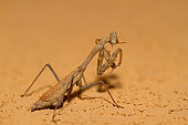 praying mantis with copy space