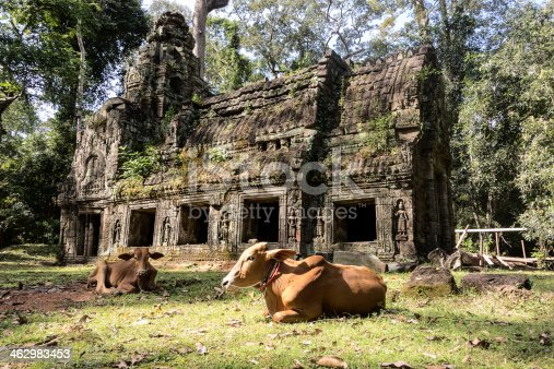 478956028 istock photo Preah Khan Building With Cow 462983453