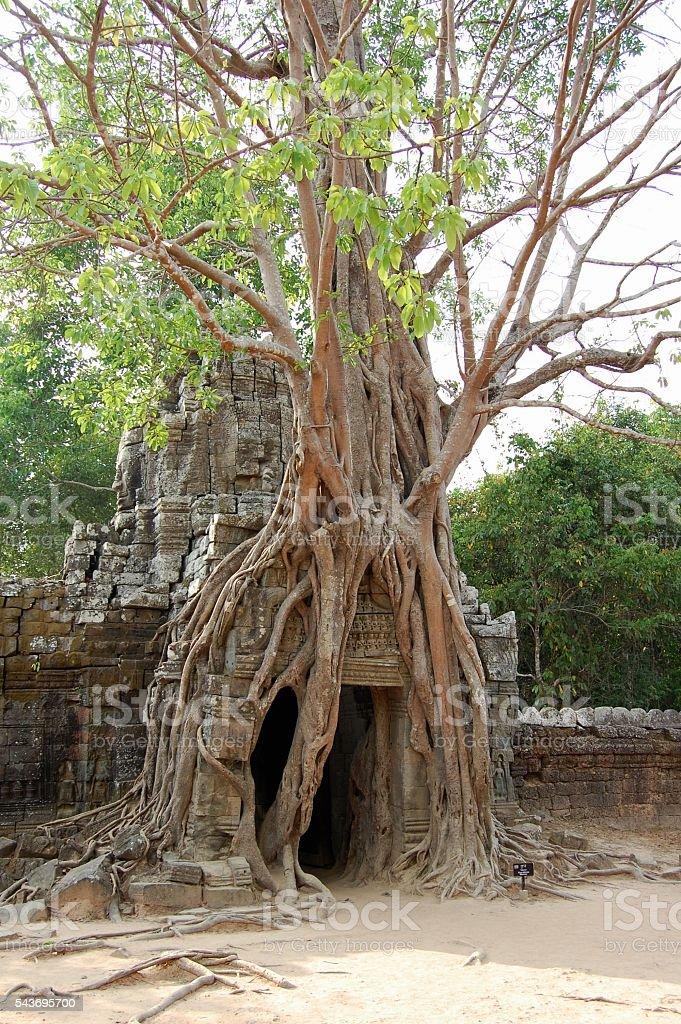 Preah Khan temple, Angkor, Cambodia stock photo