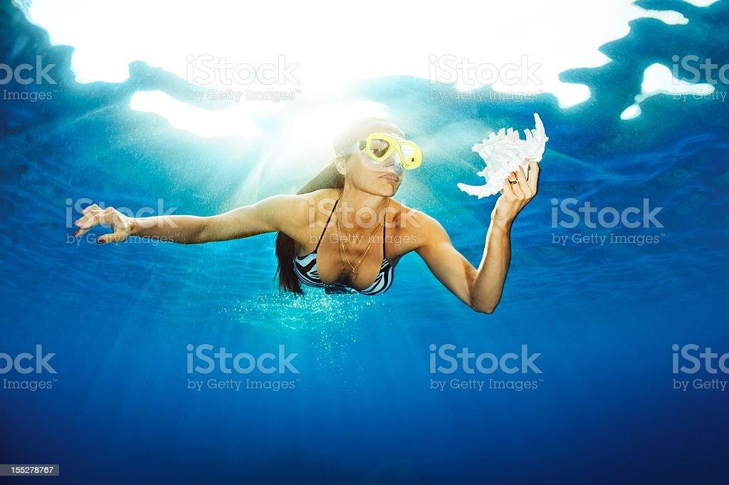 Precious seashell royalty-free stock photo