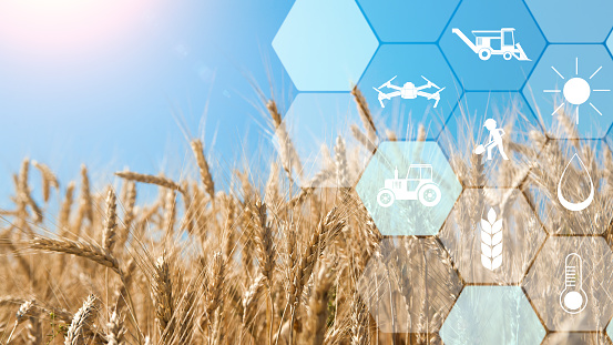 istock Precision agriculture network icons on wheat field background 1160220952