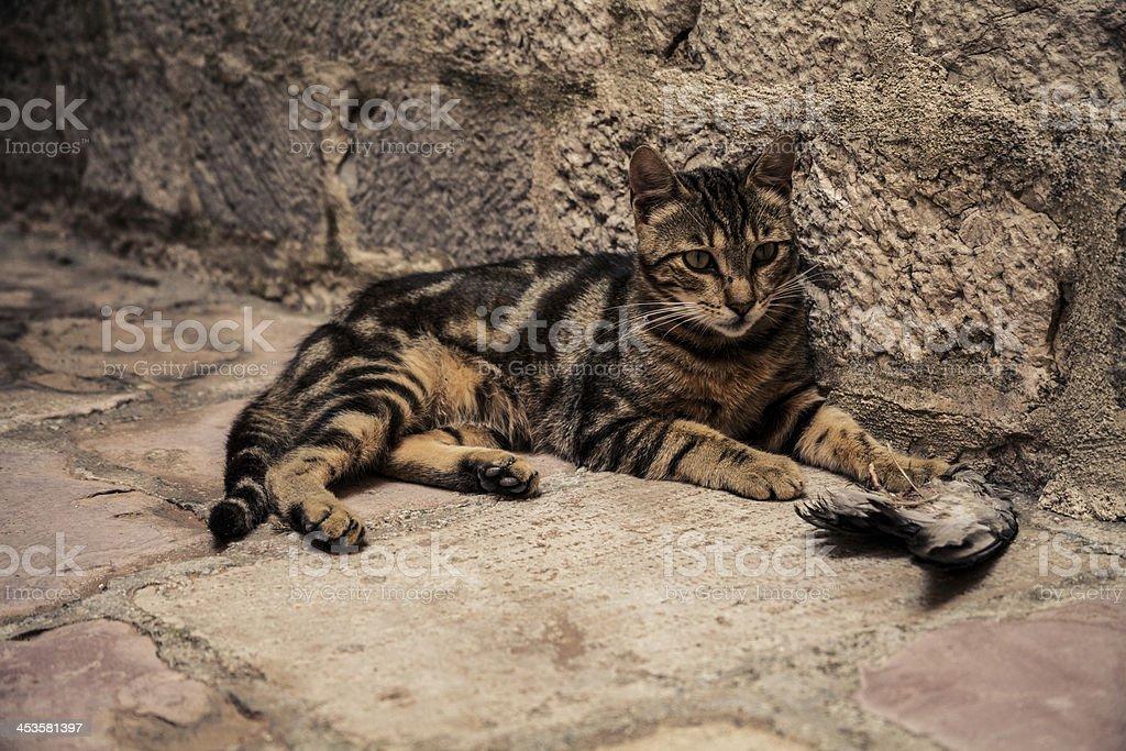 Predator on the streets stock photo