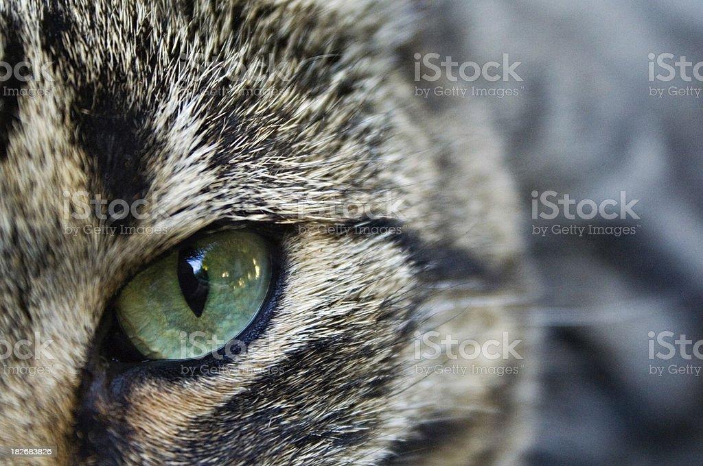 predator's eye royalty-free stock photo