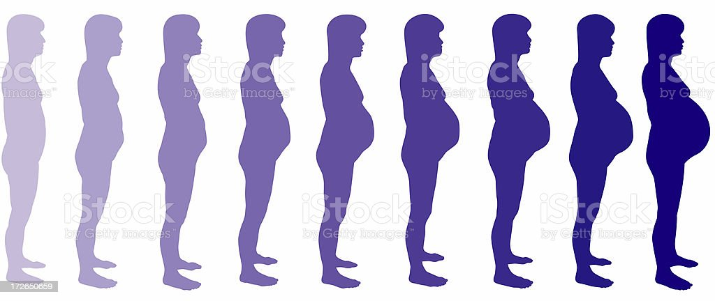 Pregnancy Month by Month (raster) royalty-free stock photo