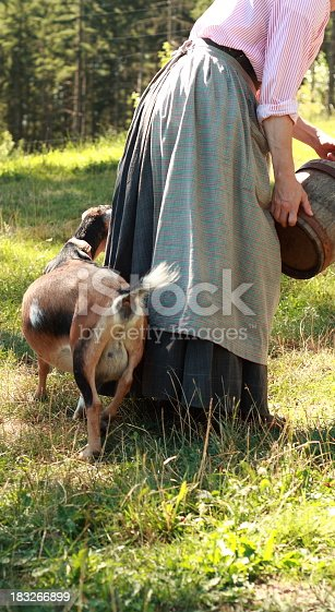 istock Pregnant goat behind lady in long old dress holding bucket 183266899