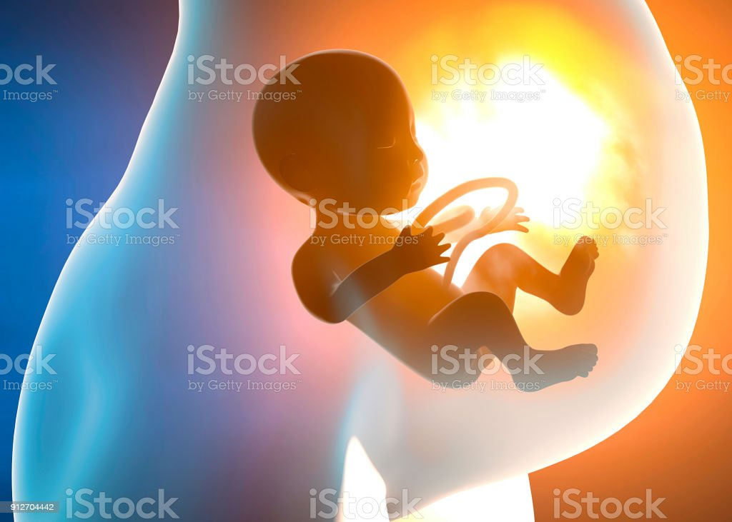 Pregnant woman and child in the womb stock photo