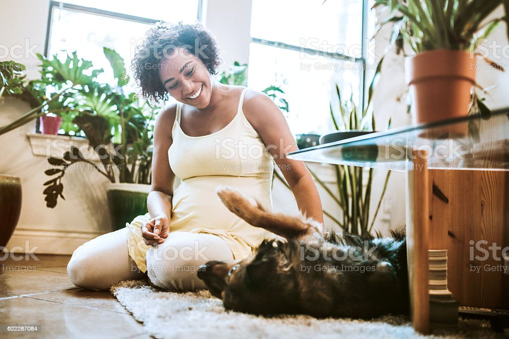 Pregnant Woman Playing With Dog stock photo