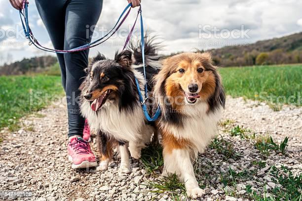 Pregnant woman walking her dogs picture id547162128?b=1&k=6&m=547162128&s=612x612&h=au x0nefqnhxe1m8gyohng3rujivisun6emfei1jyb0=