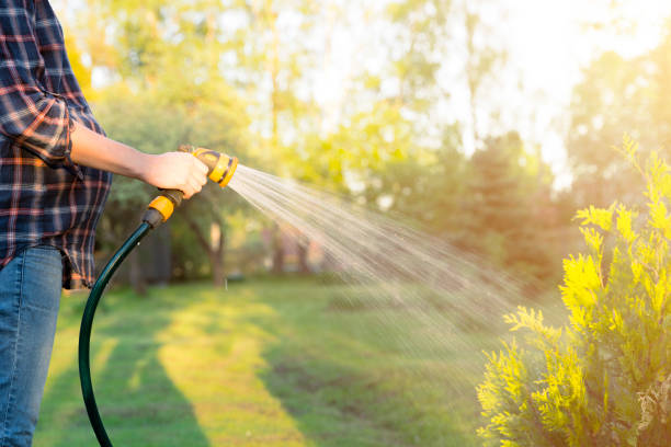 pregnant woman watering green tree with hose. gardening concept - watering stock pictures, royalty-free photos & images