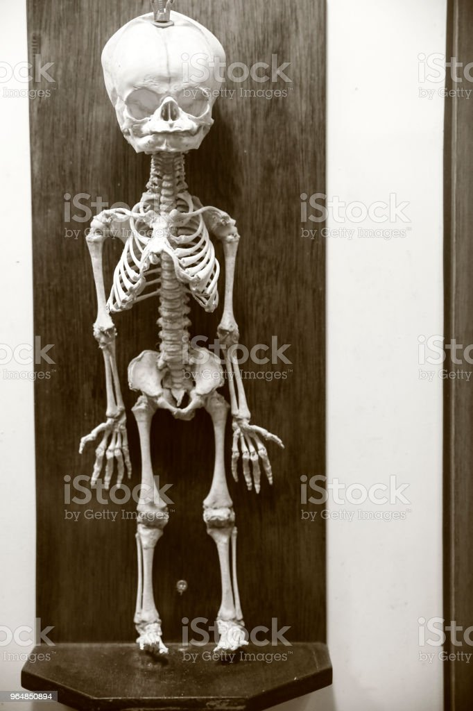 Prehistoric Baby skeleton royalty-free stock photo