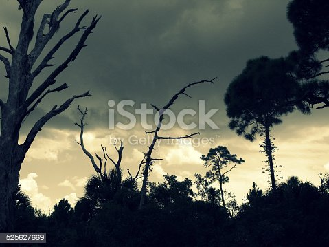 Prehistoric looking ominous sky with bare tree silhouettes.