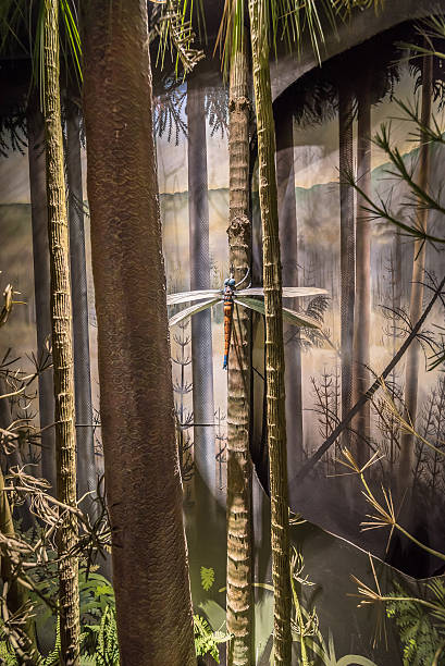 Prehistoric Dragonfly stock photo
