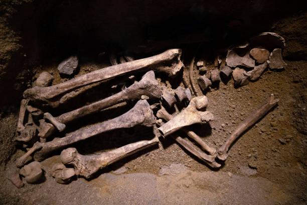 Prähistorische menschliche Knochenreste. Antikes Skelett von Archäologen, Wissenschaftlern, die Knochen im Boden analysieren und erforschen – Foto