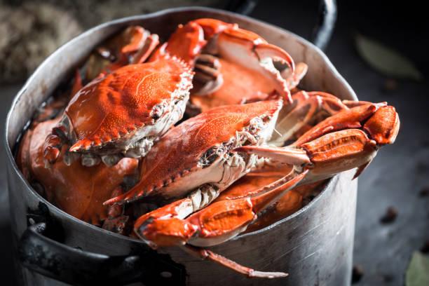 préparation de crabe maison avec piment de la jamaïque et la feuille de laurier - crabe photos et images de collection