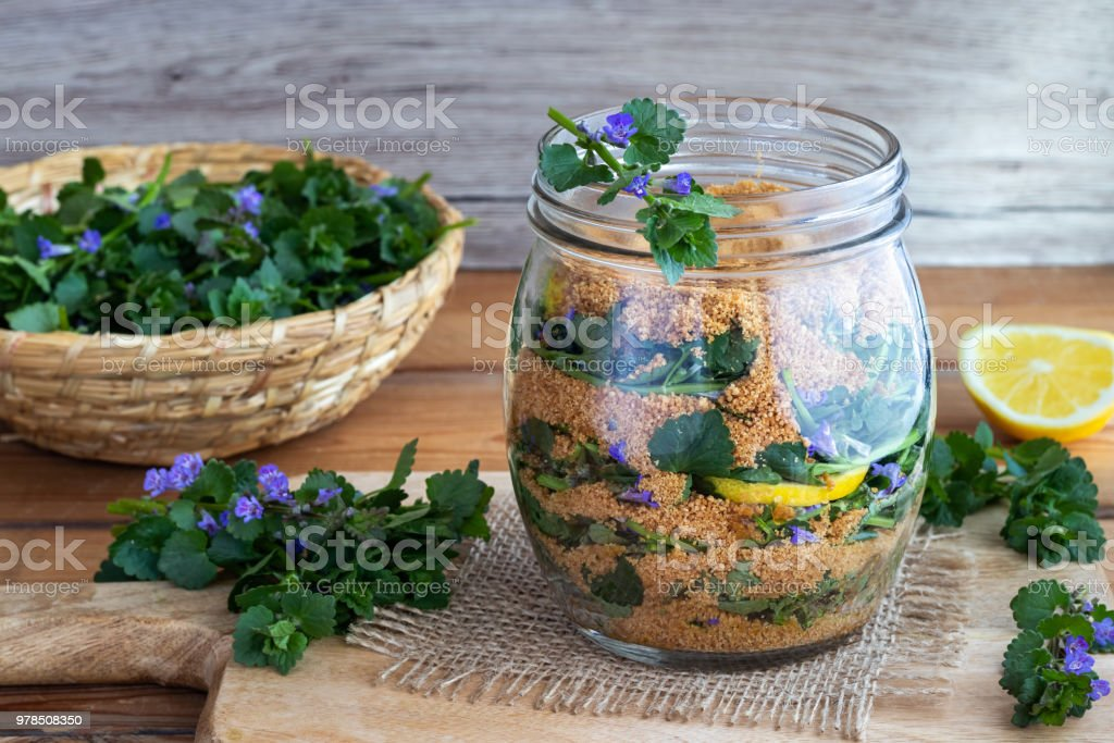 Preparation of homemade syrup from blooming ground-ivy, lemon and coconut sugar Preparation of homemade syrup against cough from blooming ground-ivy, lemon and coconut sugar Alternative Medicine Stock Photo
