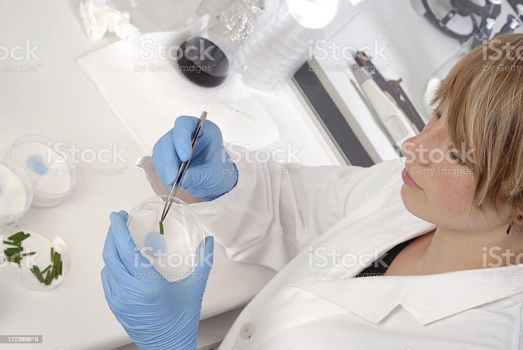 Preparation royalty-free stock photo