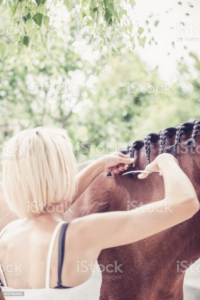 prepares horse for riding match stock photo