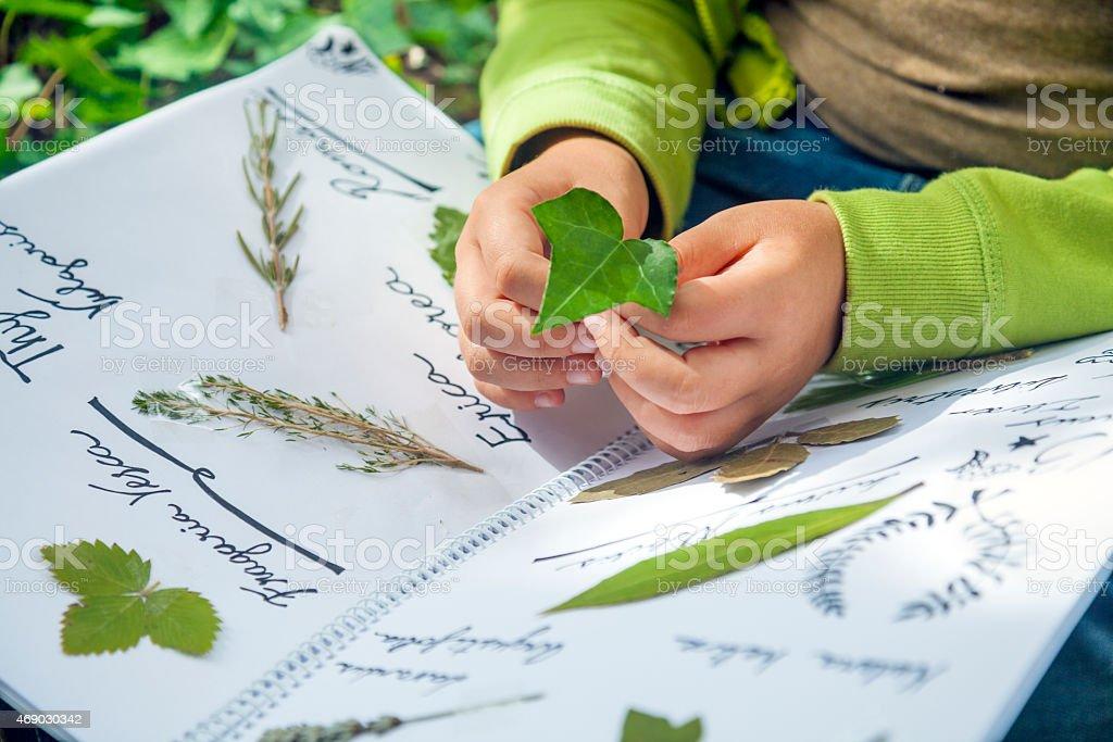 Preparin an herbarium stock photo