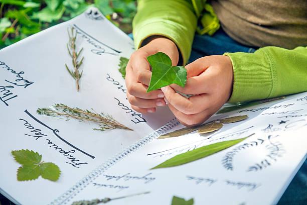 preparin um herbarium - folha de caderno imagens e fotografias de stock
