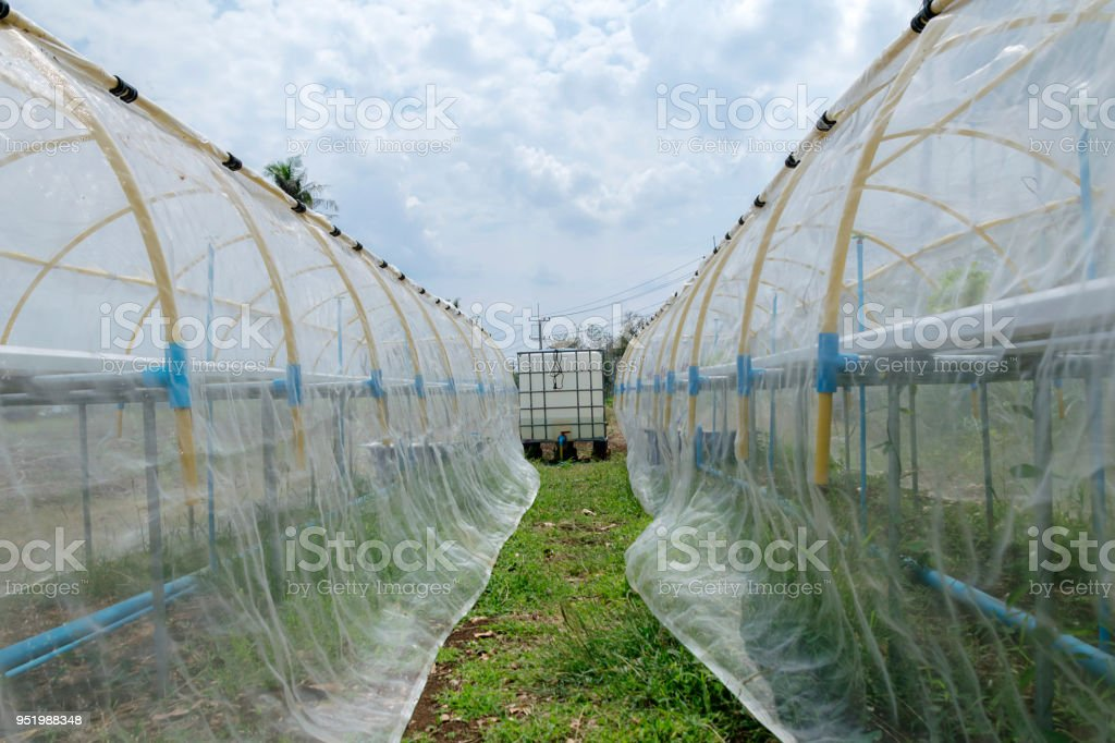 Preparing equipment for growing non-toxic vegetables. stock photo