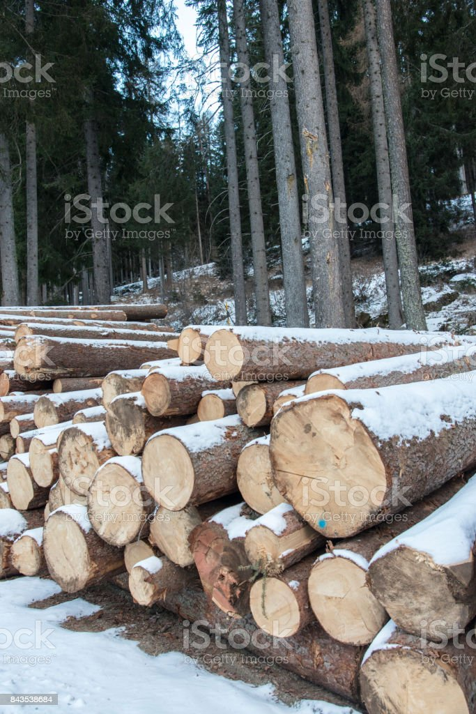 Preparing fire logs for the winter stock photo