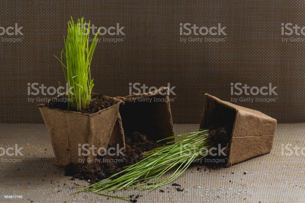 공장, Ingardening의 계절 식을 위한 준비. 제품 정 이미지입니다. 정원 개념에 심기. - 로열티 프리 가정 생활 스톡 사진