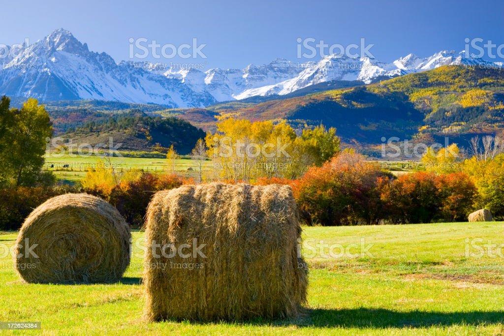 Preparing hay stock photo