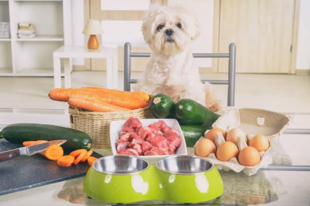 Zubereitung von natürlichen Lebensmitteln für Haustiere – Foto