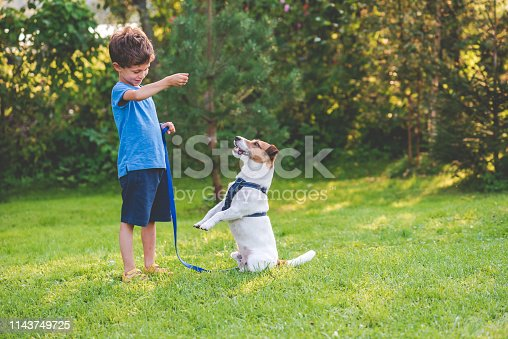 Dog learning standing on hind legs trick