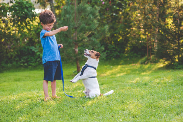 Preschooler kid boy doing dog obedience training classes with his pet Dog learning standing on hind legs trick animal tricks stock pictures, royalty-free photos & images