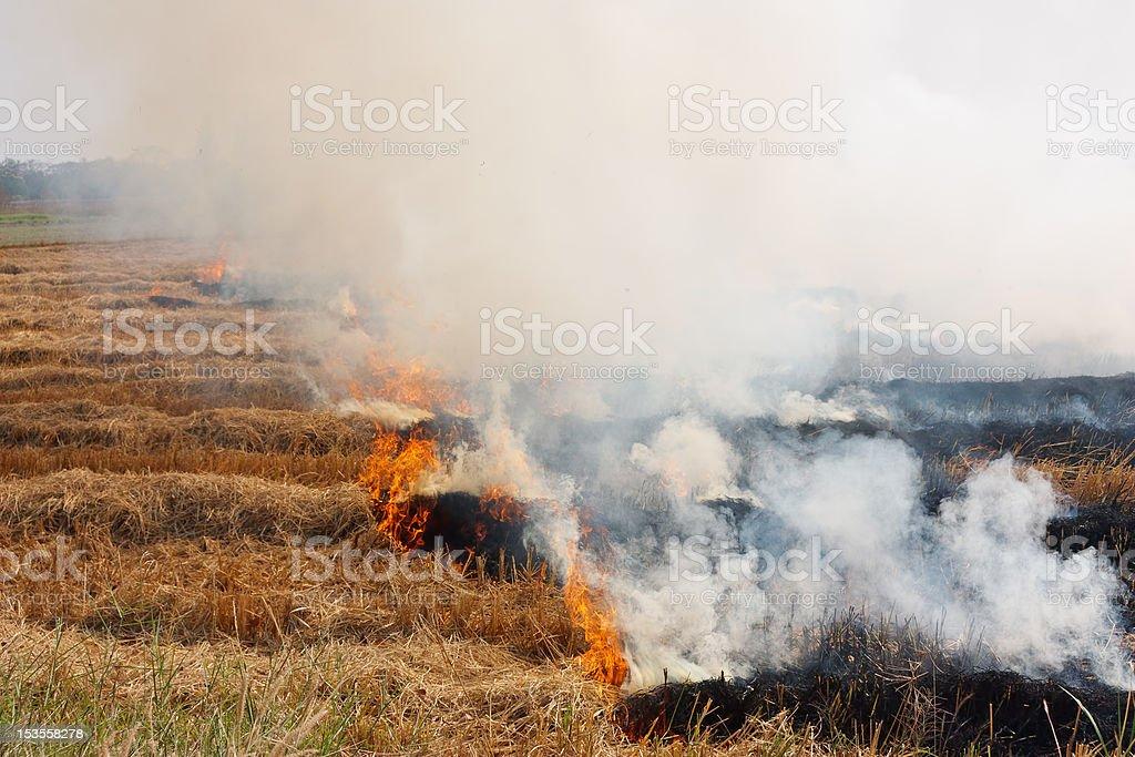 Prescribed prairie burn stock photo