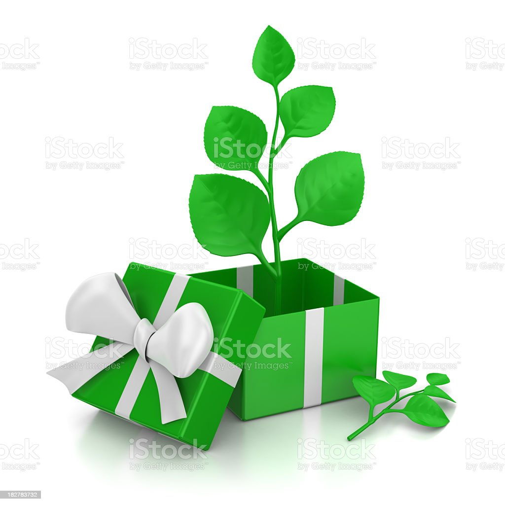 Present and Twig royalty-free stock photo