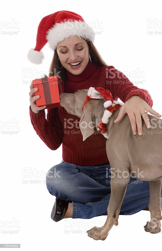Present For Puppy royalty-free stock photo