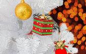 present hanging on christmas tree