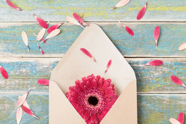 present or gift message concept with single gerbera flower in kraft envelope. greeting card on mother or woman day. - welcome march stock photos and pictures