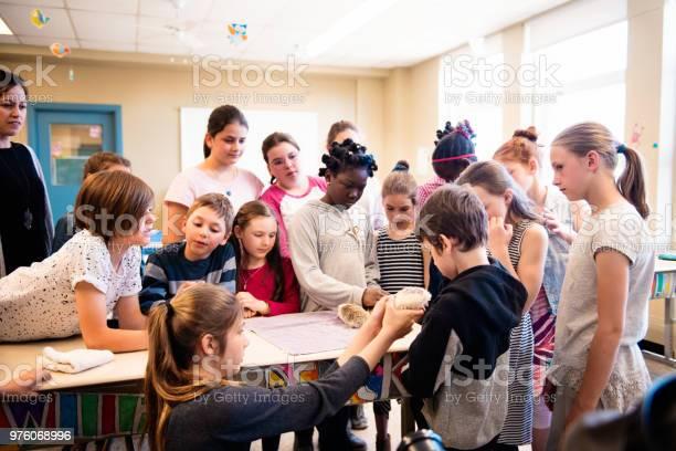 Presentation of cute hedgehogs in the classroom by schoolgirls picture id976068996?b=1&k=6&m=976068996&s=612x612&h=senowy4b4cd9hxkx0ulacqzf 9d k4nboekyyp5iyvi=
