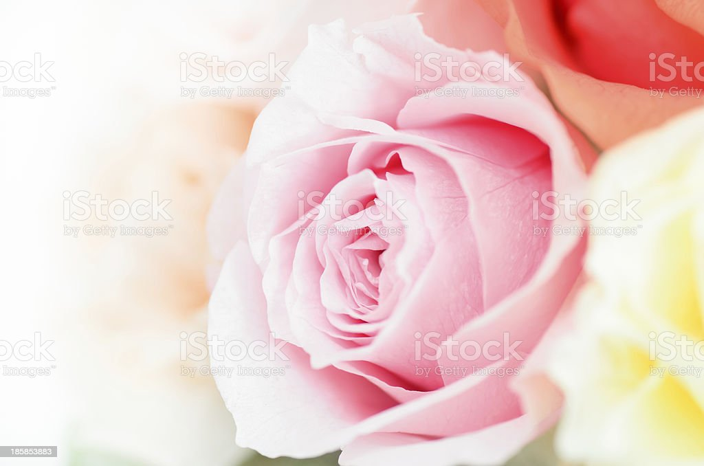 Preserved Flowers royalty-free stock photo