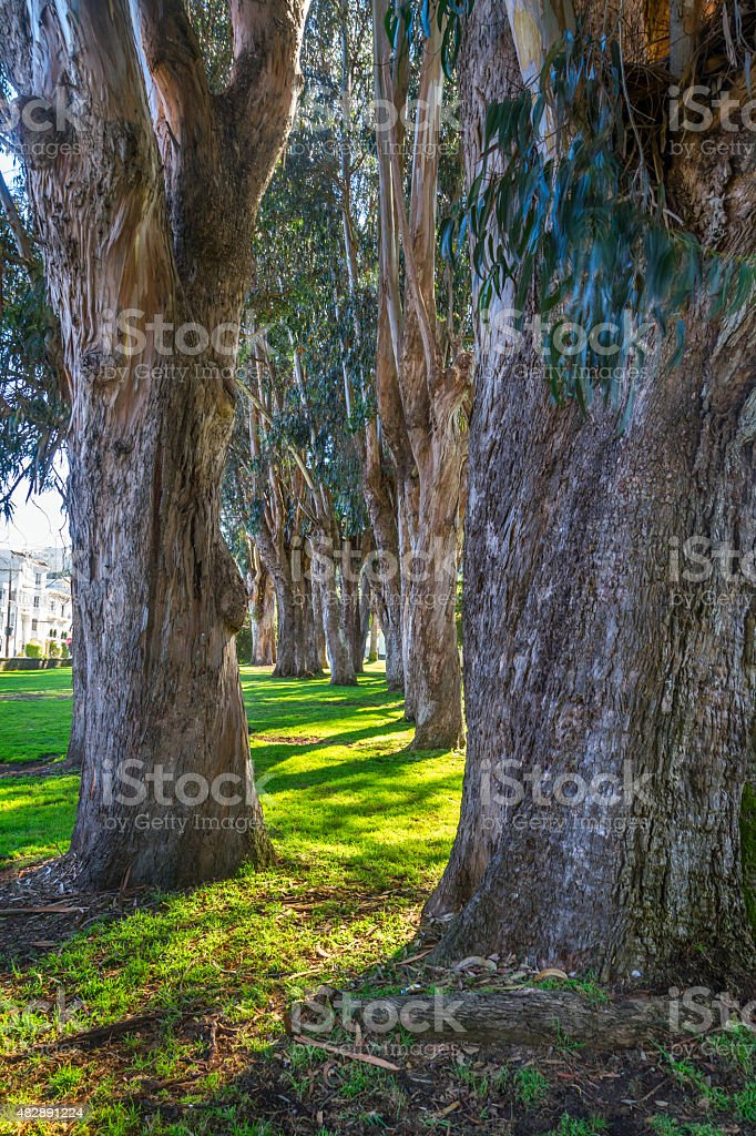 presidio landscape in San Francisco stock photo
