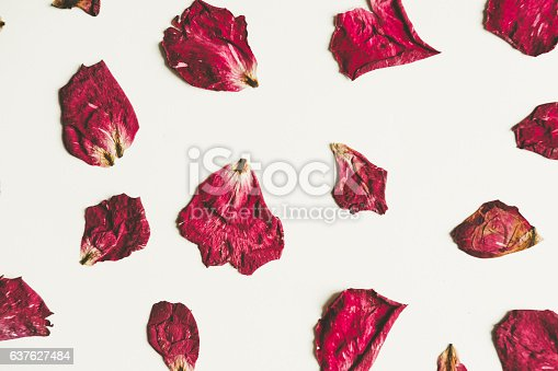 Press dried rose flower with petals, on white background, vintage tone