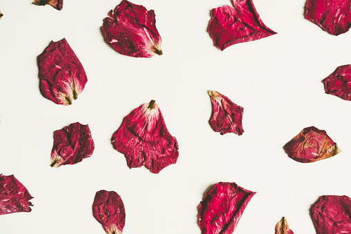 Press dried rose flower with petals, vintage tone