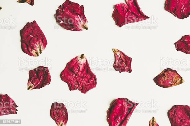 Press dried rose flower with petals vintage tone picture id637627484?b=1&k=6&m=637627484&s=612x612&h=ntk3uwaifmn5j9awxir0bdoe9ospgeg8mbrwhx2y8ii=