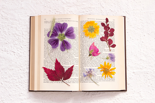 pressed flowers in an old book (Goethe, public domain)