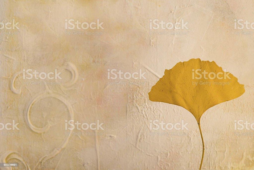 pressed gingko leaf royalty-free stock photo