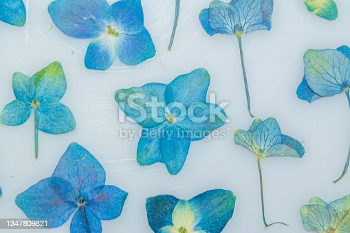 istock Pressed hydrangeas on white table 1347809821