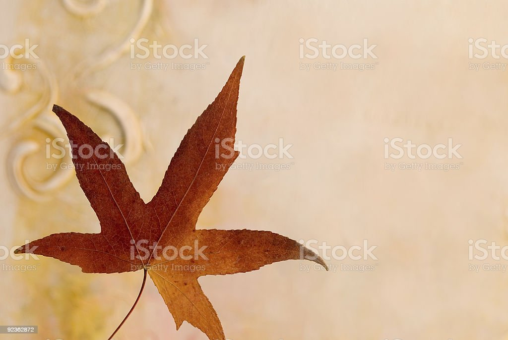 pressed leaf royalty-free stock photo